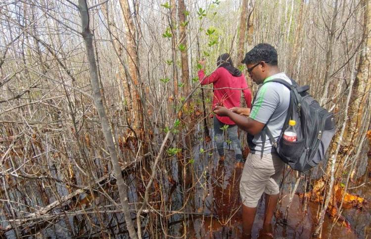 Save Maldives pledges to save Neykurendhoo wetlands on Mangrove Day