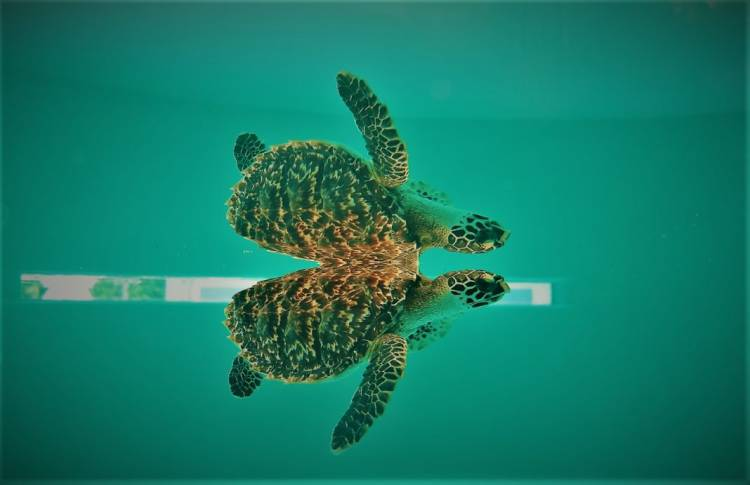 Coco Collection wants a summer intern to help rescue sea turtles